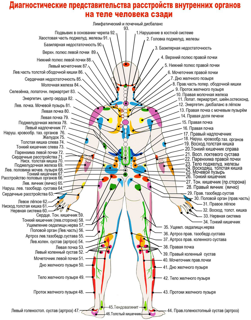 диагностика органов со спины