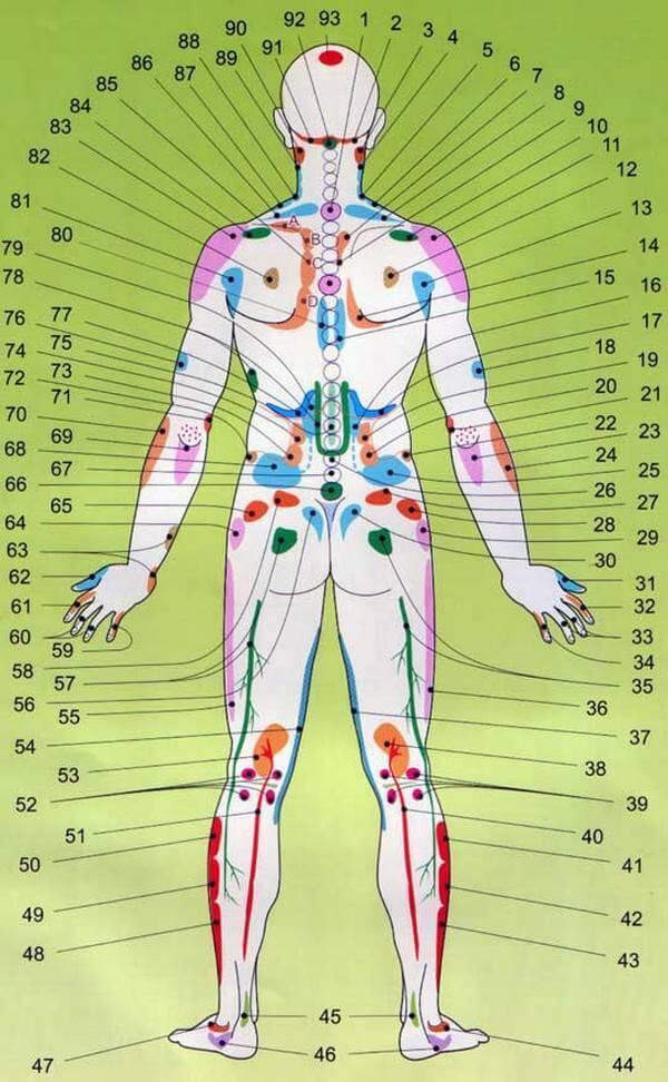 проекции органов со спины