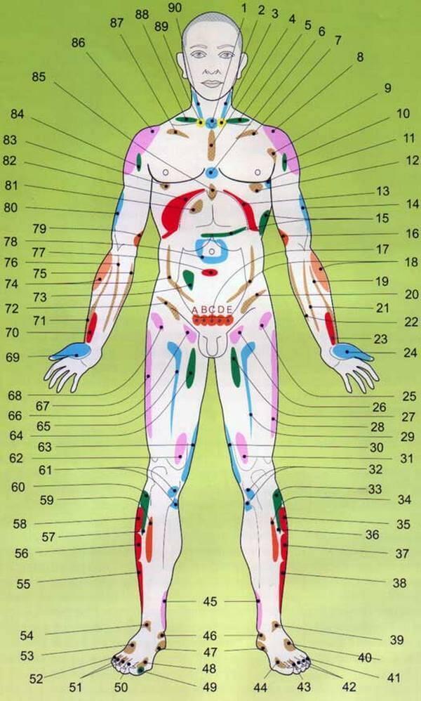 проекции органов