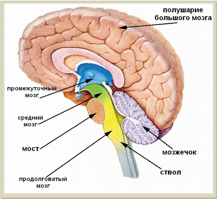 мозг 2